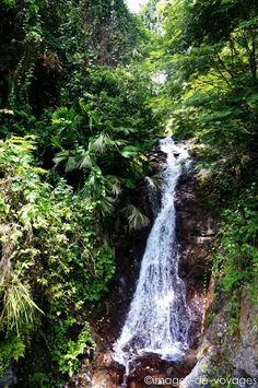 Blues Mountains - Jamaïque