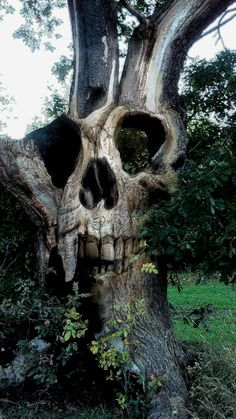 Awesome skull carving embedded in an ancient tree Magical Tree, Tree Carving, Art Brut, Skull And Bones, Skull Art, Tree Art, Macabre, Dark Art, Oeuvre D'art