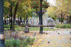 Gore Park, Hamilton Ontario Hamilton Ontario Canada, Fountain Of Youth, H Town, New Pictures, Parks, To Go, Memories, City, Happy