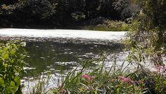 Array of lilly pads #turtlepond #centralpark