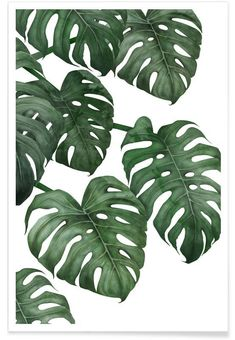 Monstera exotica Art Print by Gale Switzer - X-Small Plant Painting, Painting & Drawing, Affordable Wall Art, Art Mural, Art Graphique, Leaf Art, Typography Art, Oeuvre D'art, Watercolor Art