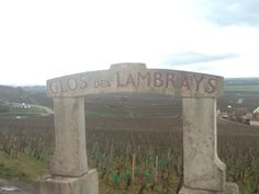 Another famous Grand Cru Clos des Lambrays in Morey-Saint-Denis. The wines from this vineyard are pretty rare on the market. Now I'm looking for some of them.