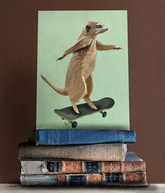 Meerkat on Skateboard - Skateboard art hipster kid hipster décor funny art print Cool kid gift geeky print geek nursery little man cave by LoopyLolly on Etsy https://www.etsy.com/listing/168208510/meerkat-on-skateboard-skateboard-art