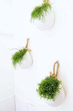 Trendy home dco green hanging plants 61 ideas Hanging Baskets, Hanging Plants, Indoor Plants, Bed In Living Room, Colorful Interior Design, Best Home Gym, Corner Garden, New Home Designs, Trendy Home