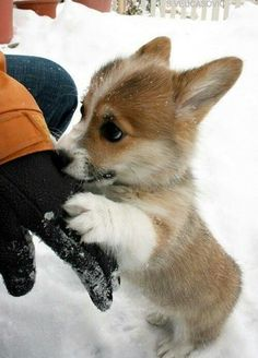Trop mignon! #histoiresdunet #cute #chien