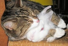 awww, kitty and bunny