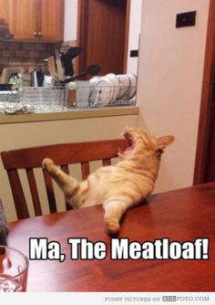 "Impatient cat - Funny cat sitting at the kitchen table getting impatient and screaming: ""Ma, the meatloaf!"""