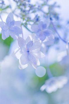Resultado de imagem para lilac