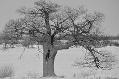 LONE BLACK AND WHITE TREE