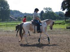 hüsch, pferd, pony, schecke, stute, western, springen, freizeit