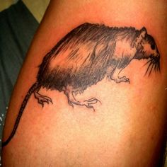 Rata pelua #tattoo #tatuaje #rata #pelua #negro #cañería #arte #neo #tradicional…