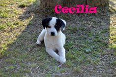 splendida-cucciola-cecilia-da-adottare