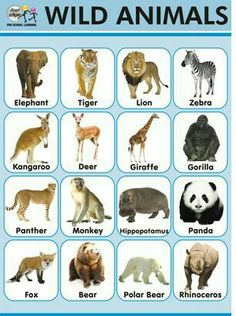 Comprehensive Wild Animals Chart With Na. - Comprehensive Wild Animals Chart With Names Pdf 2019 - Animal Pictures For Kids, Wild Animals Pictures, Animal Crafts For Kids, Printable Animal Pictures, Preschool Pictures, Wild Animals List, Zoo Animals, Animals For Kids, Animal Worksheets