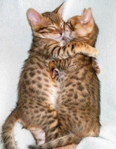 Cute Animals: Hugs!)))))))))