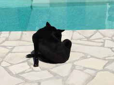 Black dog sunbathing