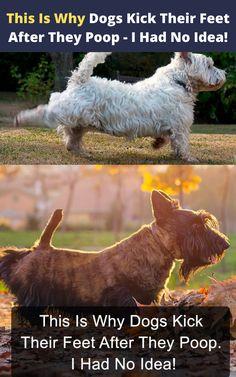 Dog Sleeping Positions, Sleeping Dogs, Dog Facts, Dog Behavior, Animal Behaviour, Dog Training Tips, Training Schedule, Funny Laugh, Dog Care