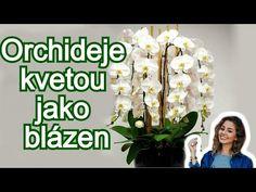 Garden Care, Gerbera, Plant Care, Dream Garden, House Plants, Flora, Nature, Gardening, Planting Plants
