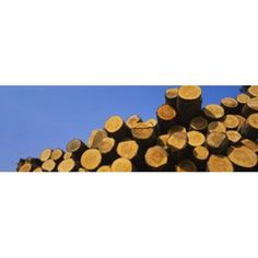 Stack of wooden logs in a timber industry Austria Canvas Art - Panoramic Images (36 x 12)