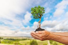 Impact Investing - A Quick Definition and How to Invest