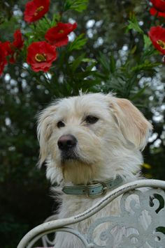 my sweet sweet dog