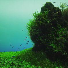 水槽の中の景色 scenery in the aquarium