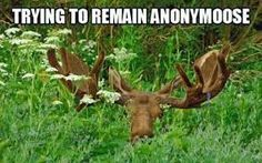 Anonymoos