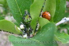 De Verde Casa: Inverno é época de pragas nas plantas