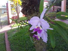 #Orchideen en la #Casa Renga y Julia #vinales #cuba una #Atmosphere #tranquila #UNESCO #casaparticular #hostel #BedandBreakfast for you http://t.co/teipfdlydw www.casavinales.jimdo.com