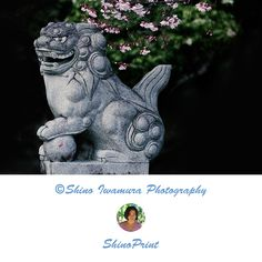Lion Photography Photo, A moment in Japan, Living Room Art, Kyoto Home Decor lion photography, lion photo, living room photo, living room art, kyoto decor, kyoto photo, kyoto photography, kyoto photograph, japanese decor, japan decor, japan decorations, japan wall art, photo wall art
