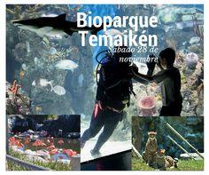 ¡Mañana visitá Temaiken!