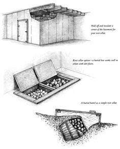 DIY Root Cellar   Seed Saving – How to Save Money in an Organic Garden : http://www.homesteadsurvivalist.com/2013/07/seed-saving-how-to-save-money-in-an-organic-garden-2.html