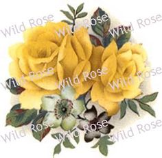 AmaZinG YeLLoW CaBbaGe RoSeS ShaBby ChiC DeCALs | Designs by Iris