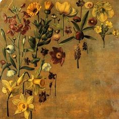 andfreedomfor:  Daffodils and other Flowers,Albrecht Dürer c. 1503