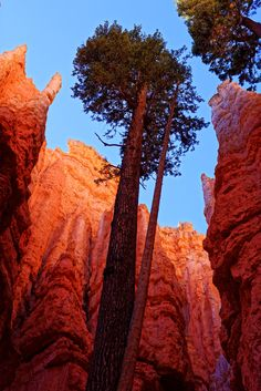 bryce national park - bryce national park Bryce National Park, National Parks, Monument Valley, Nature, Travel, Naturaleza, Viajes, Destinations, Traveling