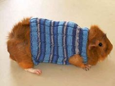 And because guinea pigs need love too: