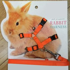 Pet Rabbit Soft Harness Leash Adjustable Bunny Traction Rope for Running Walking - Rabbit - - Pet Rabbit Soft Harness Leash Adjustable Bunny Traction Rope for Running Walking Price : Rabbit Drawing, Rabbit Art, Pet Rabbit, Bunny Leash, Bunny Harness, In China, Nylons, Scarf Storage, Buy Pets