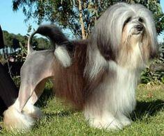 rare dog names - 336×280
