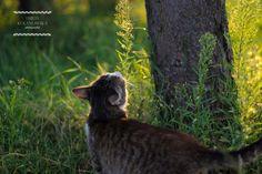 Kochamy zwierzęta – Emilia Kolanowska