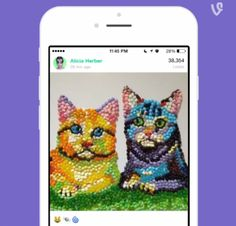 Vine's post on Vine Wonderful Things, Vines, Social Media, Messages, Twitter, Android, Trends, Business, Cats