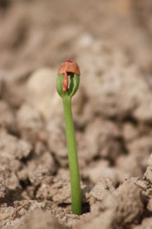 7 Tips to Get the Best Farm Photos: like a close-up of sprouting seeds