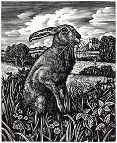 March Hare by Howard Phipps, Wood Engraving. . Another hare, I tend to like the same things, but had to be 'Pin'd' as it is so good
