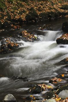 """""""Flowing Through Autumn Copper Leaves"""" Framed or Unframed Fine Art Prints Available in Various Sizes from £6.30 http://dwhitfieldart.wordpress.com/landscape-photography/autumn-stream-collection/"""