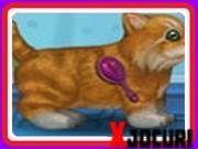 Kitten Names, Up Game, Games For Girls, Celebrity Dresses, Kittens Cutest, Pet Care, Scooby Doo, Kitten Heels, Jeep