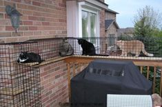 Safe, Friendly Cat and Dog Enclosures » Home of Habitat Haven.....will be doing this for our babies.