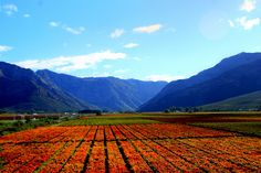 de Doorns in herfs by inaoos, via Flickr South Africa, Westerns, Cape, African, Spaces, Mountains, Nature, Travel, Beautiful
