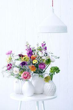 Ranonkel Ranunculus Bloemen Flowers