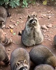 - So Funny Epic Fails Pictures Cute Little Animals, Cute Funny Animals, Cute Cats, Tiny Baby Animals, Baby Wild Animals, Adorable Dogs, Cute Animal Videos, Funny Animal Pictures, Fail Pictures