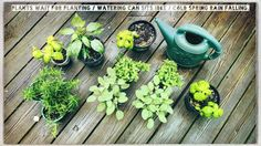 Plants wait for planting / watering can sits idle / cold Spring rain falling.  #micropoetry #haiku