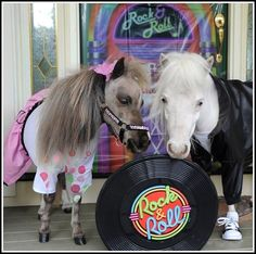 "They've seen ""Grease."" 