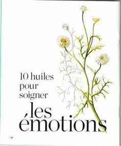 10 essential oils to treat emotions - Aroma terra peütica - Maquillage Camomille Romaine, Eco Beauty, Naturopathy, Doterra, Natural Health, Aromatherapy, Health And Beauty, Herbalism, Massage
